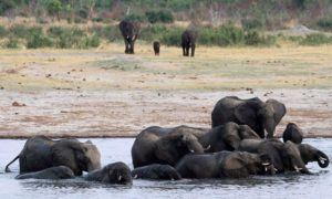 Elephants in Zimbabwe's Hwange National Park. Photograph: Philimon Bulawayo/REUTERS